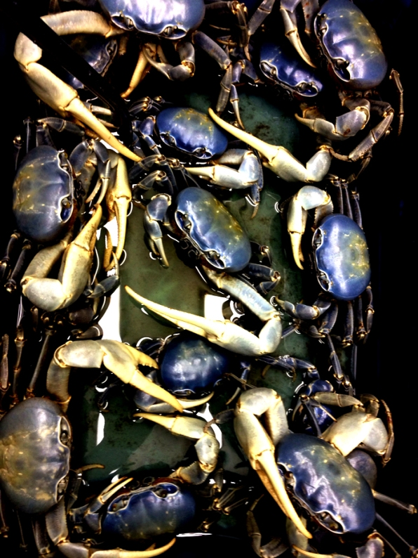 9 megs_blue crabs